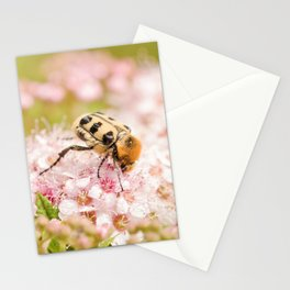 Beetle Stationery Cards