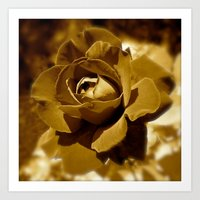 rose gold Art Prints featuring Gold Rose by SoCoArt
