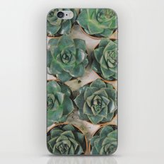 Succulent Collection iPhone & iPod Skin