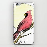 cardinal iPhone & iPod Skins featuring Cardinal by Eric Weiand