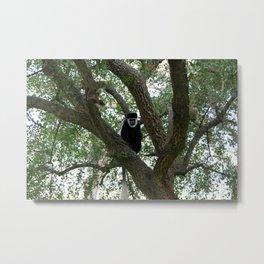Monkeying Around 2 Metal Print