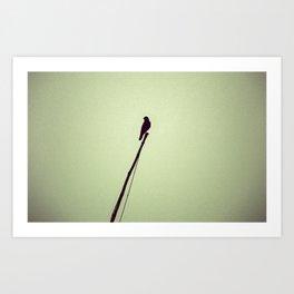 Lonely Bird Art Print