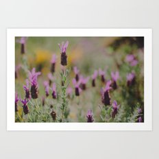 Smell the Lavender Art Print