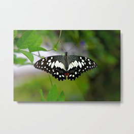 Butterfly Large Metal Print