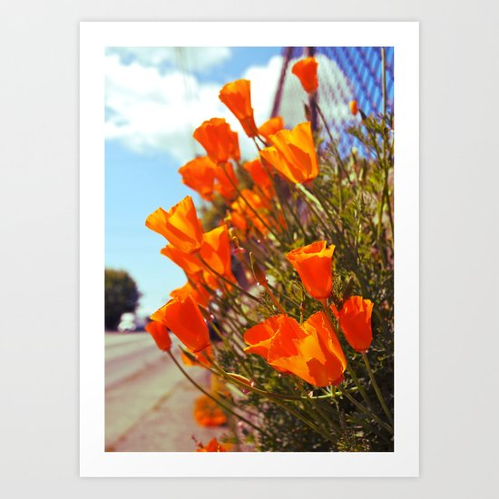 Roadside poppies Art Print