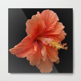 Double Orange Hibiscus DPG160419 Metal Print