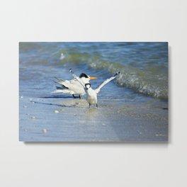 Playful Tern Metal Print