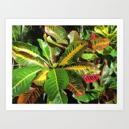 Beautiful Croton Art Print