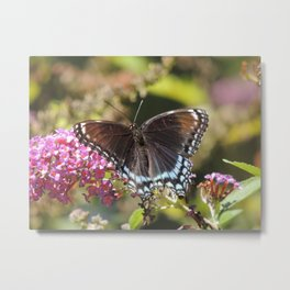 Butterfly with flowers d1 Metal Print