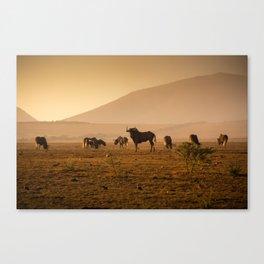 Herd of Wildebeest grazing in South Africa Canvas Print