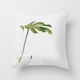 Single Monstera Leaf In Clear Glass Zen Minimalist House Plant Photo Throw Pillow