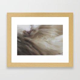 Kibble Nose Framed Art Print