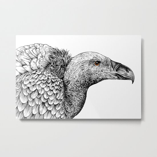 White-backed Vulture Metal Print