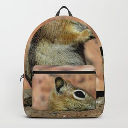 Golden Mantled Ground Squirrel & The Canyon Backpack
