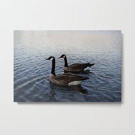 Geese at sunset Metal Print