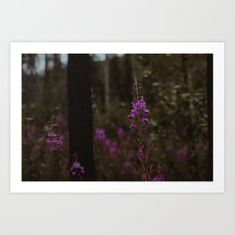 Purple North Art Print