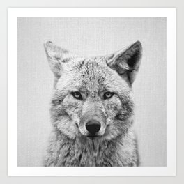 Coyote - Black & White Art Print
