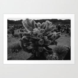 Cholla Cactus Garden XIII Art Print