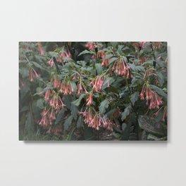 Longwood Gardens - Spring Series 252 Metal Print