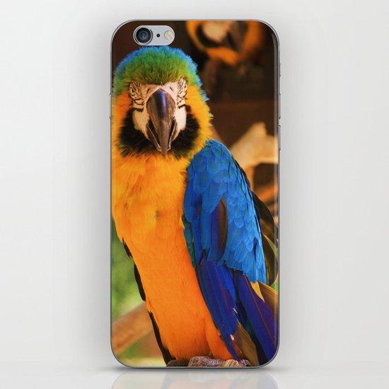 ~Bird Beauty~ iPhone & iPod Skin