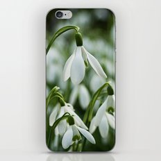 Snowdrops iPhone & iPod Skin