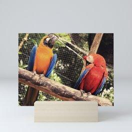 couple of macaws - casal de araras Mini Art Print