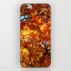 autumn day iPhone & iPod Skin