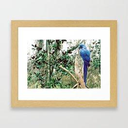 A Blue Macaw Framed Art Print