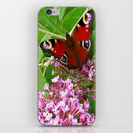 Peacock Butterfly iPhone Skin