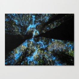 Tree's of New Zealand Canvas Print