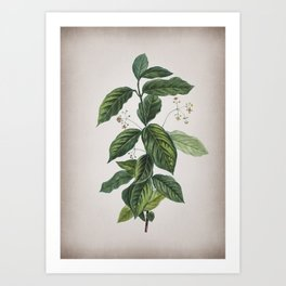 Vintage Broadleaf Spindle Botanical on Parchment Art Print