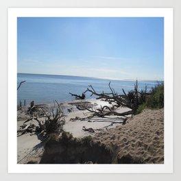 The Boney Trees on the Beach Art Print