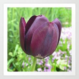 451 - Purple Tulip Art Print