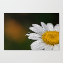 Raindrops and Daisy Canvas Print