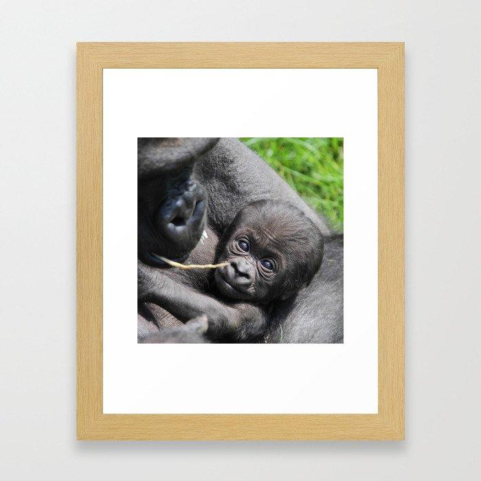 Gorilla20151201 Framed Art Print