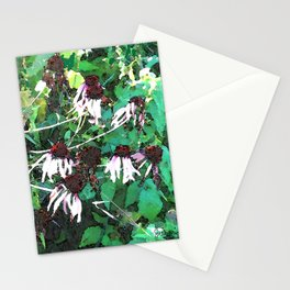Watercolor Echinacea Stationery Cards