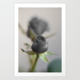 A Black Rose for your Sweetheart Art Print