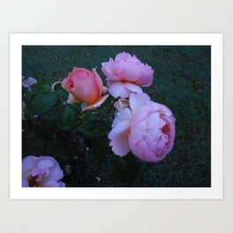 Roses in the Mist Art Print