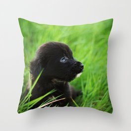 Shelter Puppy Throw Pillow
