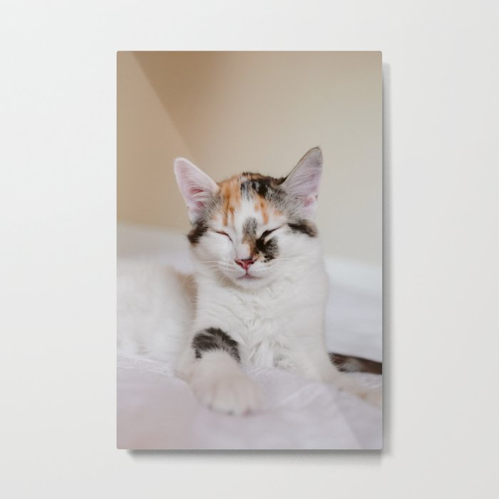 Sleepy cat (II) Metal Print