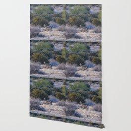 Desert Coyote Wallpaper