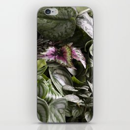 Moody Plants  |  The Houseplant Collection iPhone Skin