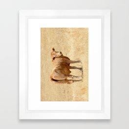 Cow No. 02 Framed Art Print