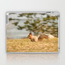 Squirrel's Lunch Break #decor #society6 Laptop & iPad Skin