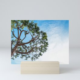 Maritime pine in French Riviera in a sunny winter day Mini Art Print