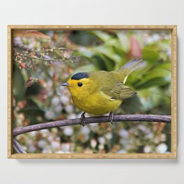 Cute Wilson's Warbler on the Grapevine Serving Tray