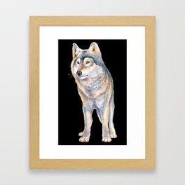 Timber Wolf Framed Art Print