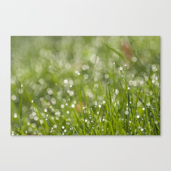 Fresh green meadow - Green grass with waterdroplets sparkling in the sun on #Society6 Canvas Print