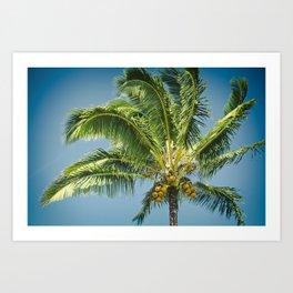 keanae hawaiian coconut palm Art Print