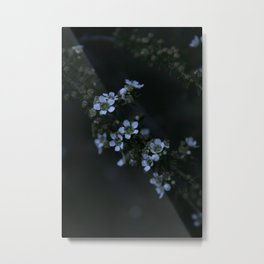 White Manuka Metal Print